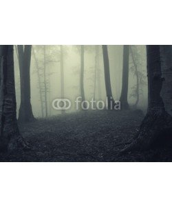andreiuc88, Fog in dark forest