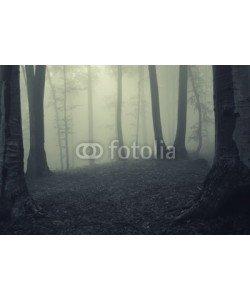 andreiuc88, Fog in dark forest