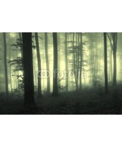 andreiuc88, Fog in the forest with trees in counter light
