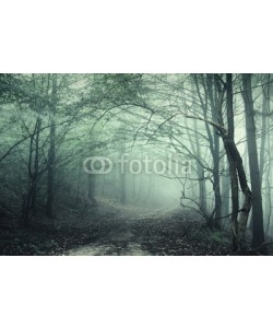 andreiuc88, Fog in the forest