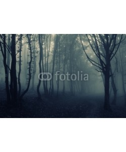andreiuc88, forest landscape with fog
