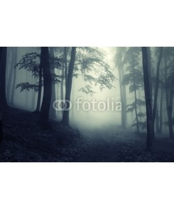 andreiuc88, Forest