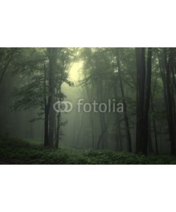 andreiuc88, Green forest after rain