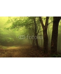 andreiuc88, Green forest with fog