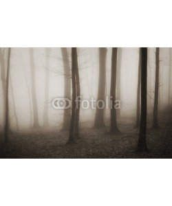 andreiuc88, mysterious forest with fog in sepia and dark trees
