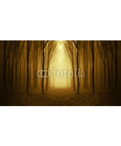 andreiuc88, path through a golden forest at sunrise