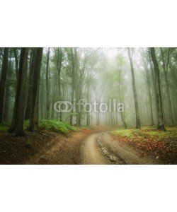 andreiuc88, road in the woods trough the fog