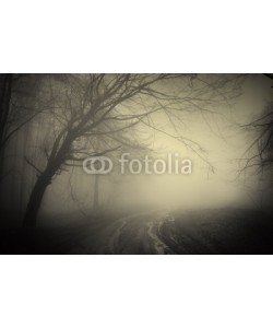 andreiuc88, road through a dark forest