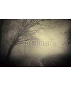 andreiuc88, road through a dark forest