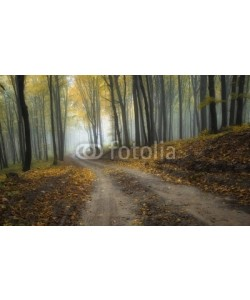 andreiuc88, road through a misty forest with beautiful colors in autumn