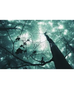 andreiuc88, tree in a magical forest with green fog