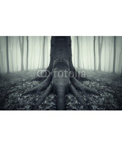 andreiuc88, tree with strong roots in a forest after rain