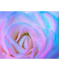 Anna Omelchenko, Abstract wet rose background