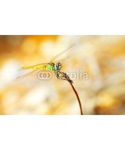 Anna Omelchenko, Closeup portrait of dragonfly