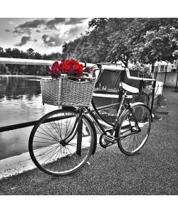 Assaf Frank, Romantic Roses I