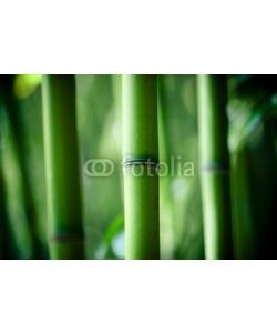 Beboy, Bambou zen