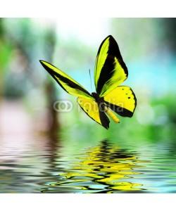 BEMPhoto, Butterfly 15