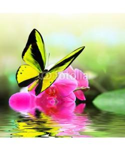 BEMPhoto, Butterfly 8