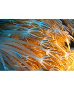 Berhard Böser, Unterwasserwelt II