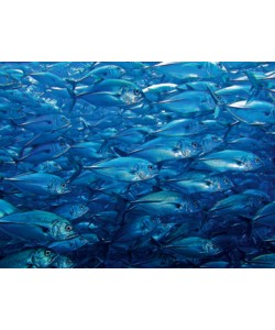 Berhard Böser, Unterwasserwelt III