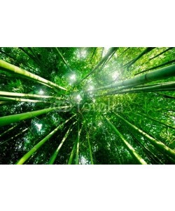 Beboy, Bambou zen forêt