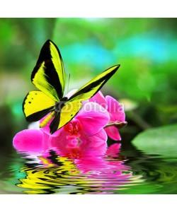 BEMPhoto, Butterfly
