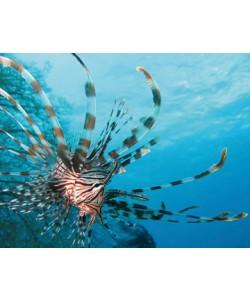Berhard Böser, Unterwasserwelt I