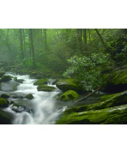 Tim Fitzharris, Roaring Fork River flowing through fores