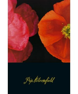 Pip Bloomfield, Poppy Duo I