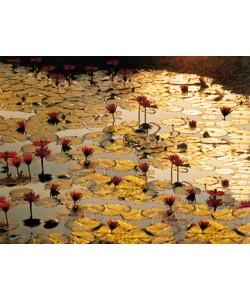 BrunoBaumann, Lotus Pond