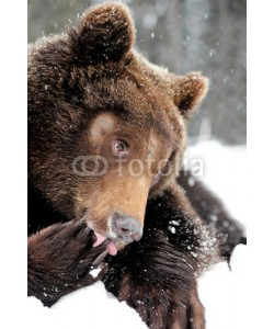 byrdyak, Bear