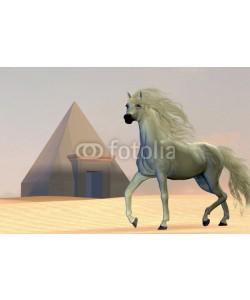 Catmando, Arabian Horse