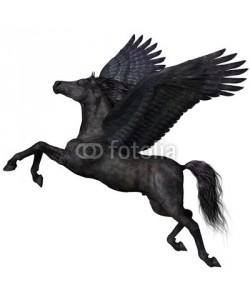 Catmando, Black Pegasus Profile