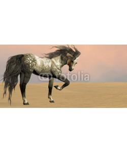 Catmando, Desert Arabian Horse