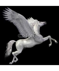 Catmando, White Pegasus Profile