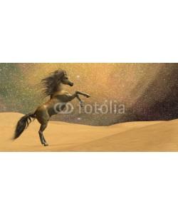 Catmando, Wilderness Horse