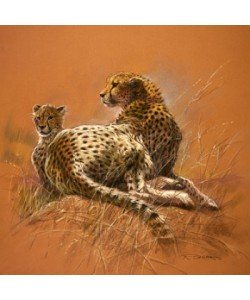 Renato Casaro, Cheetah Mother