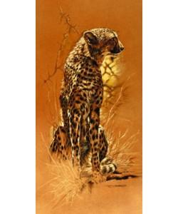 Renato Casaro, Cheetah