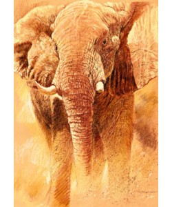 Renato Casaro, Elefant Study