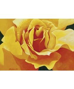 Christian, Honeymoon (Yellow Rose)