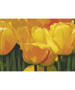Christian, Yellow Time For Tulips