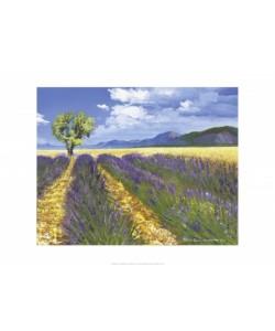 Chekirov Talantbek, Lavendelfeld mit Baum