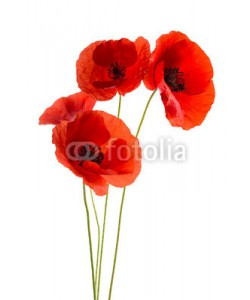 Chlorophylle, Coquelicots