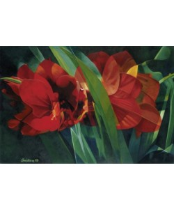 Christian, Magic Blossom (Amaryllis)
