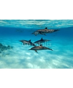 crisod, Dolphins in the sea
