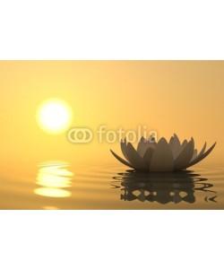 dampoint, Zen flower lotus on sunset