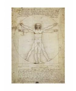 Leonardo da Vinci, Schema Delle Proporzioni