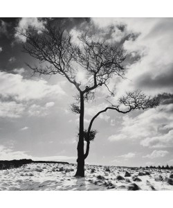 Dave Butcher, Lone Tree # 2, Peak District, England