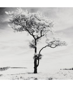 Dave Butcher, Lone Tree # 3, Peak District, England