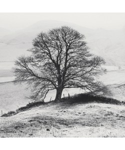 Dave Butcher, Misty Tree, Peak District,  England